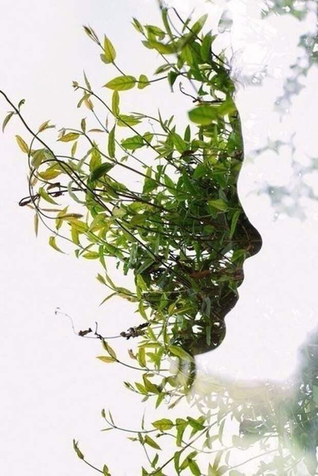 Лицо природы. Контур обведен на запотевшем стекле.