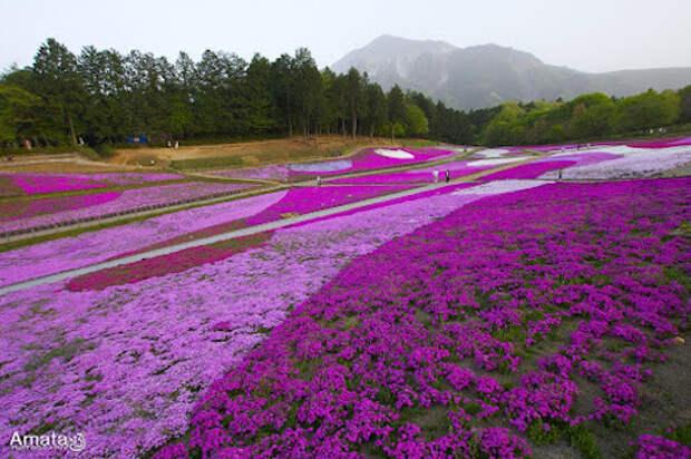Пять самых красивых цветущих локаций в мире