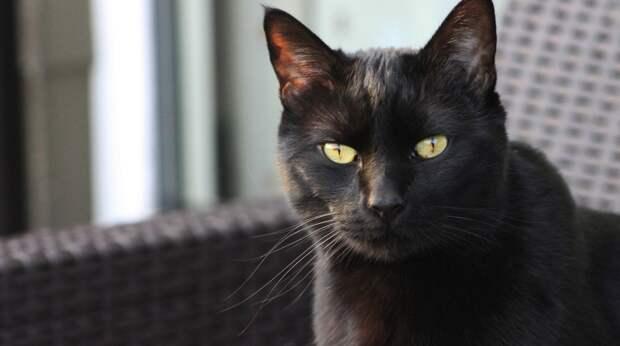Может ли у кошки поседеть шерсть и нормально ли это