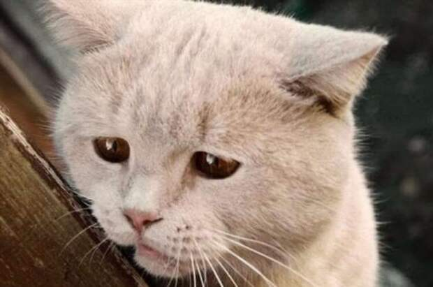 Почему слезы соленые?