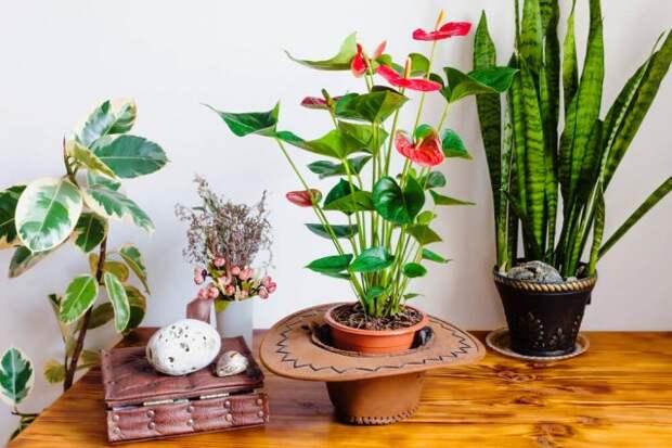 Цветущие растения в зимнем саду