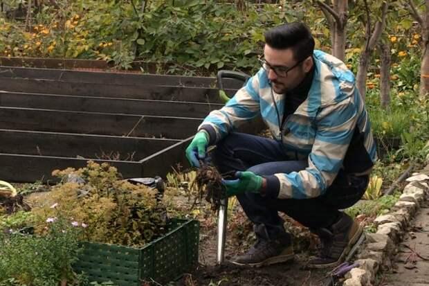 Пора выкапывать георгины! Вот как правильно хранить их зимой
