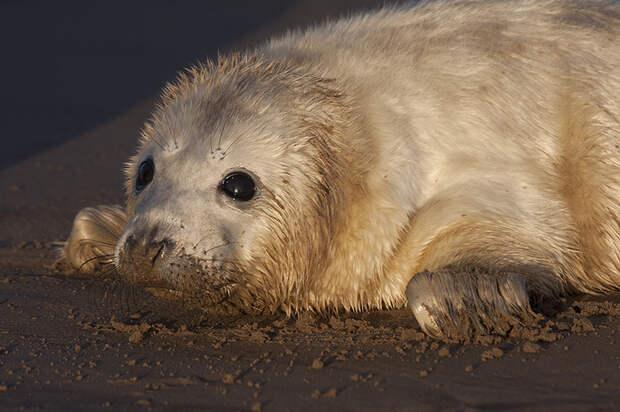 Самые милые в мире тюлени в объективе английского фотографа