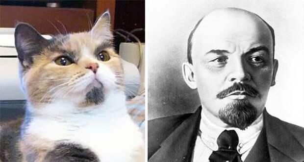 Все говорили Ленин злой, а он оказывается котик животные, копии, юмор