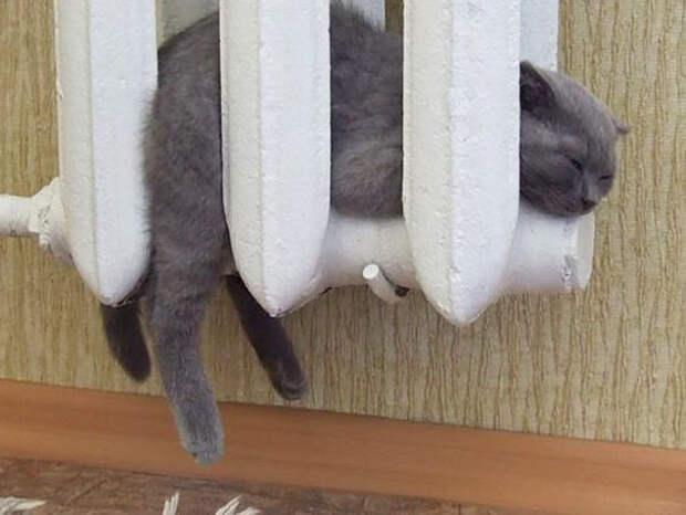 Спящие живтоные