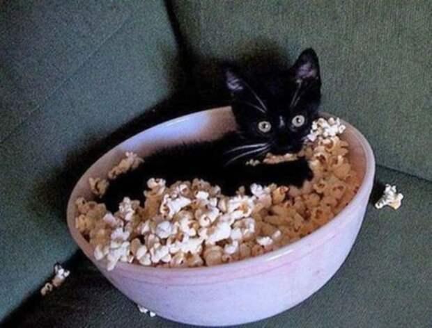 Котенок в миске с попкорном.