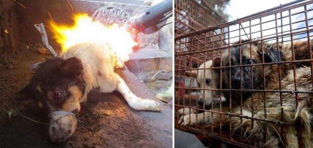 Часто над собаками издеваются