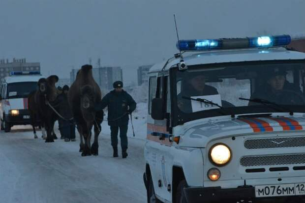 Брошенных умирать на морозе цирковых животных выручили спасатели