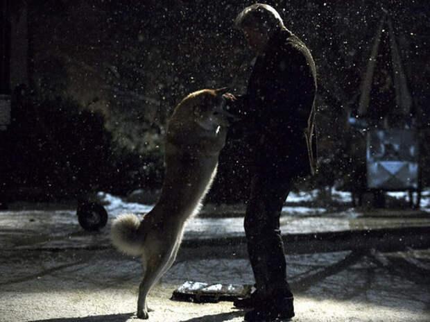 Стиль собачки: 9 лучших фильмов о псах