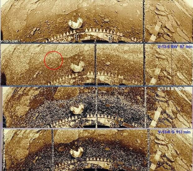 Леонид Ксанфомалити рассказал подробности открытия жизни на Венере