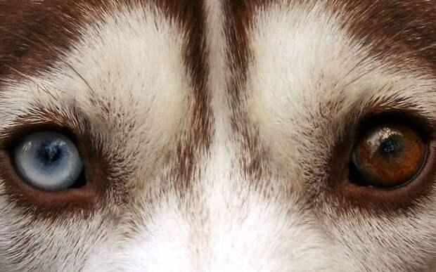 фото собака лижет пизду