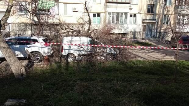 В Севастополе дерево упало на два автомобиля