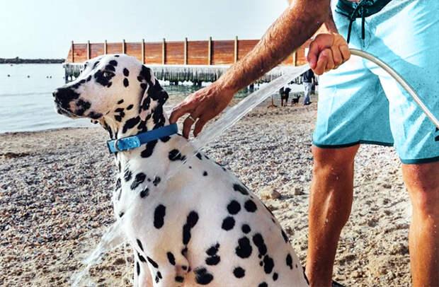 пляжный душ для собак тель-авив