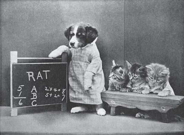 Смешные зверята из прошлого: фотографии Гарри Уиттер Фриса (1879-1953).