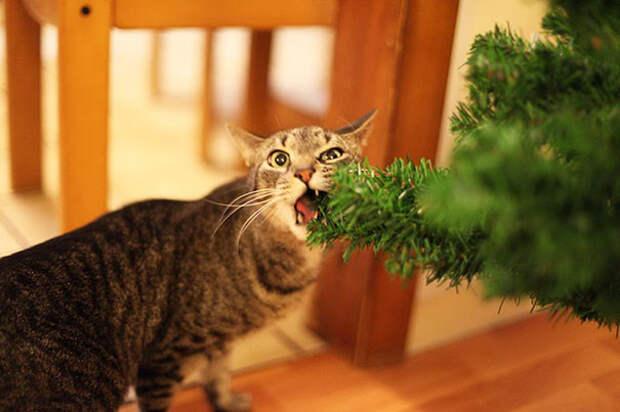 12. Просто деликатес!  елка, кошка, подборка
