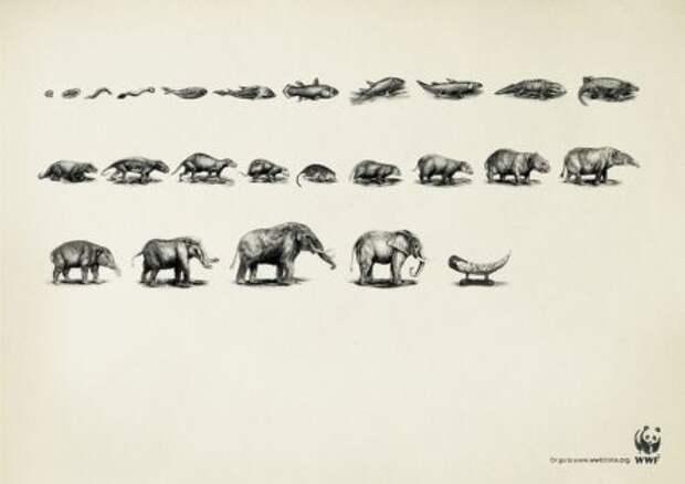 Шуба – завершающий этап эволюции тигров