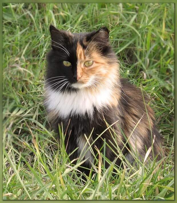 Необычный окрас животные, коты, кошки, необычные, окрас