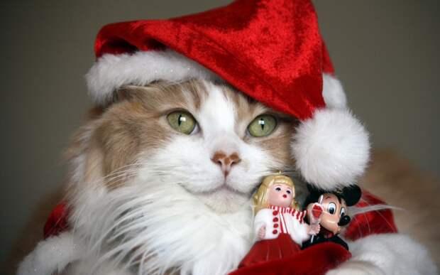Новогодние домашние животные любимцы, новый год, фото