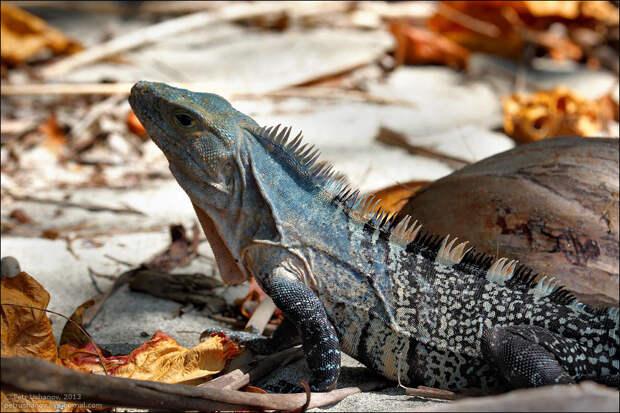 Животные Коста-Рики