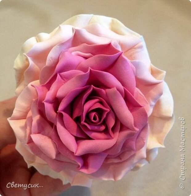 Мастер-класс Флористика искусственная Лепка МК розы из ХФ как и обещала Фарфор холодный фото 1