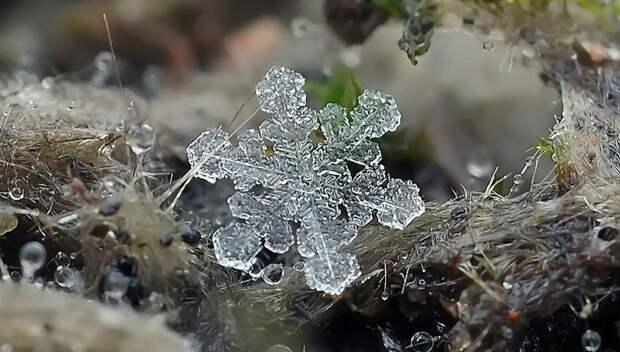 Снежинки отфотографа Андрея Осокина