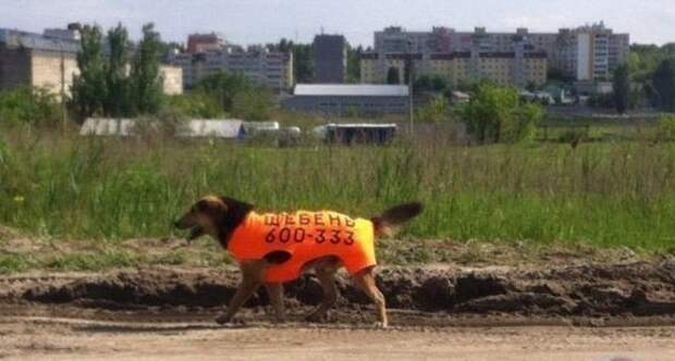Тайная жизнь домашних животных: скандалы, интриги, расследования домашние животные, животные, кошка, прикол, свинья, собака, юмор