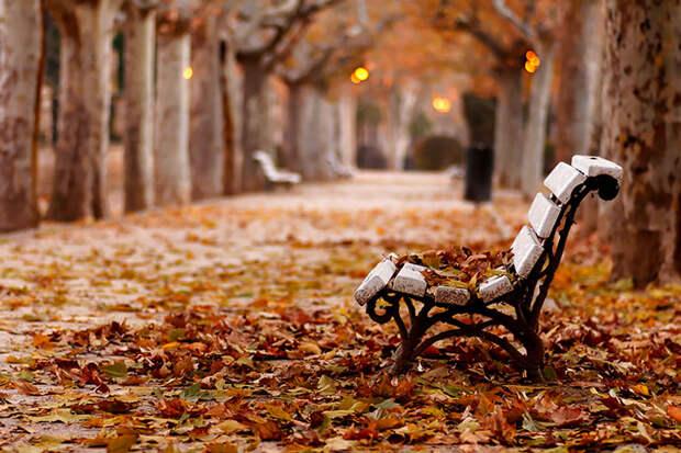 золотая осень парк