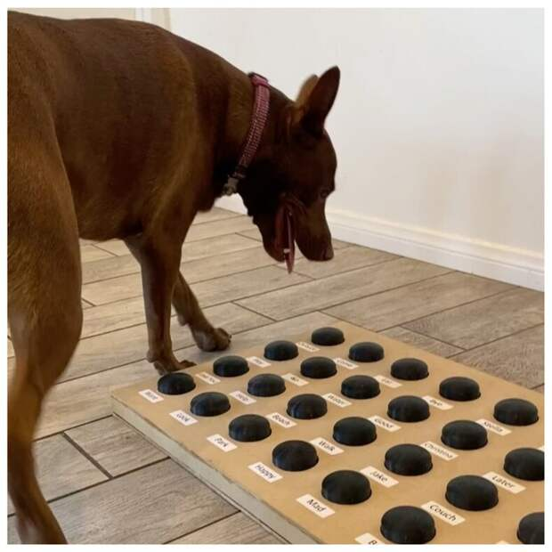 Логопед научила свою собаку разговаривать: песик уже знает 40 слов