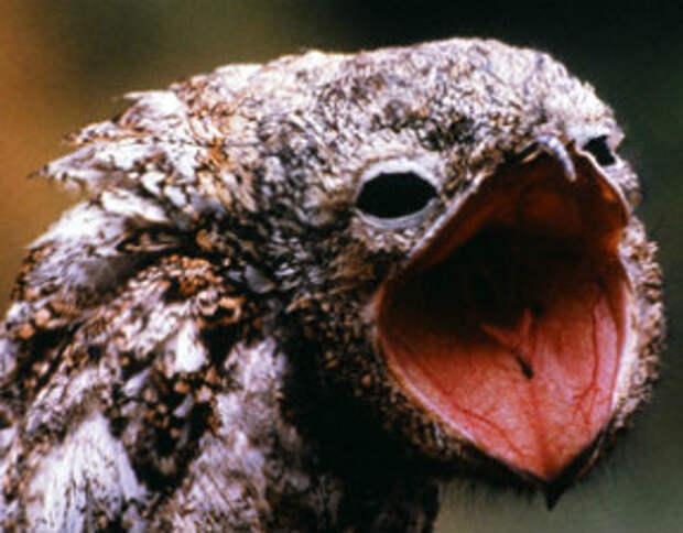 15 самых необычных птиц мира