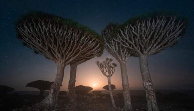 Драконовы деревья на Сокотре в объективе фотографа Даниила Коржонова