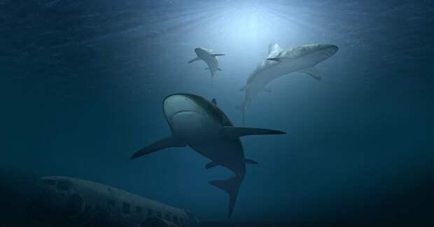 Новозеландские акулы умеют светиться в темноте, выяснили ученые