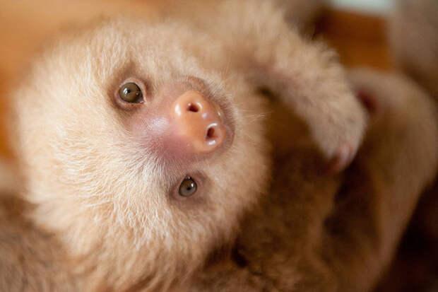 Институт помощи ленивцам в Коста-Рике