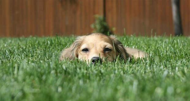 http://fafka.ru/wp-content/uploads/2010/07/dog-in-glass.jpg