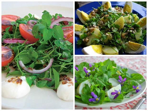 Салат из мокрицы с лучком дача, рецепты, сорняки