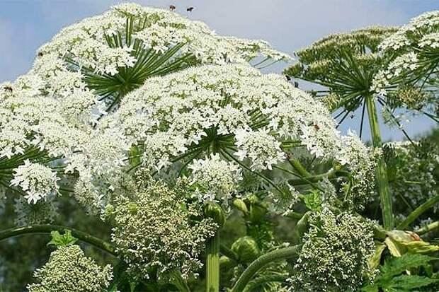 Bohemian life - Herb Magic - неделя четвертая. Темная сторона растений