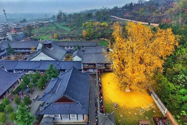 Осень никуда не ушла, она прячется в китайском храме