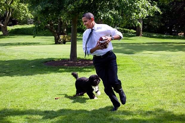 Португальская водяная собака Бо бизнесмен, животные, политик, факты
