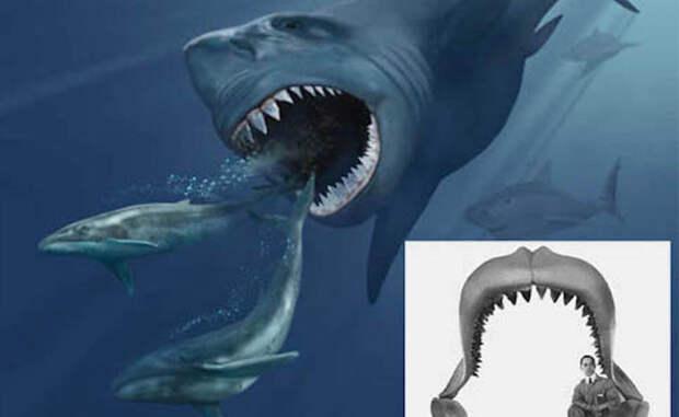 Странные и пугающие акулы, найденные в морских глубинах