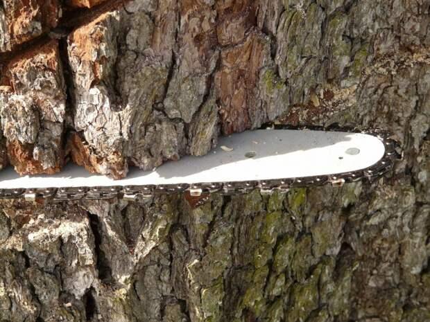 В Хорошевке вырубят 43 дерева