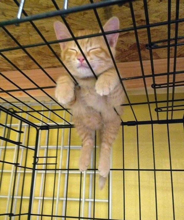 13. Ему удобно котенок, сон