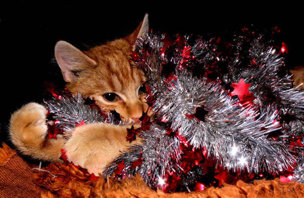 3166706_merry_christmas_by_biljana1313d35kuwf (700x456, 132Kb)