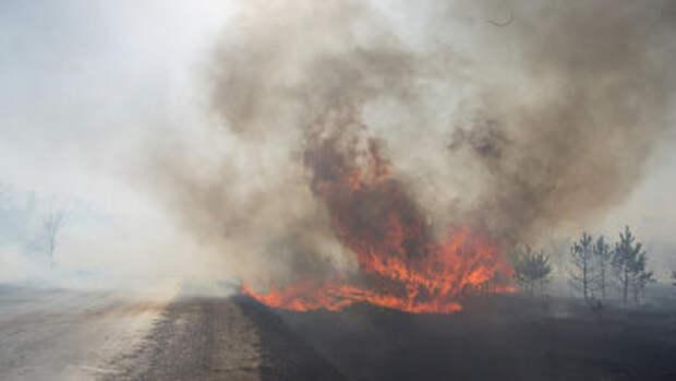 Сухая трава горит в поле в Амурской области. Архивное фото