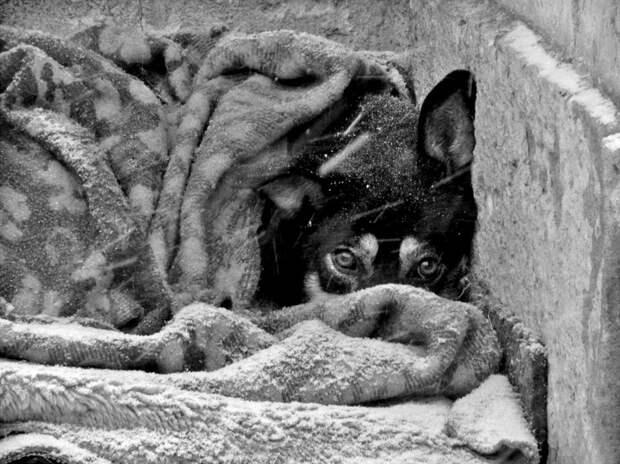 Собак выбрасывают на мороз