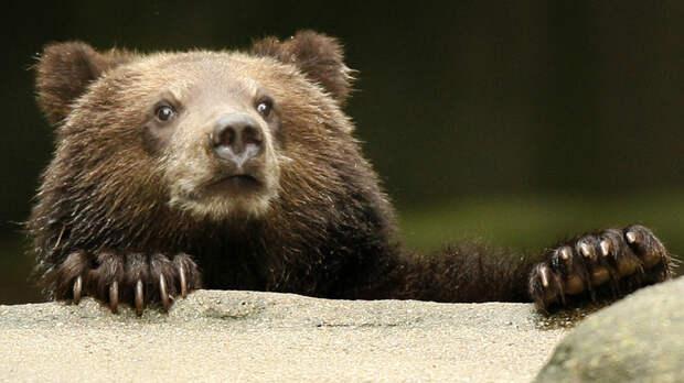 Охотник дал советы по защите от медведей