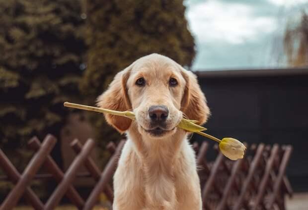 Правда или вымысел? Тест на знание фактов о собаках