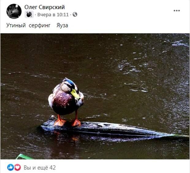 Фото дня: утка осваивает сёрфинг на Яузе