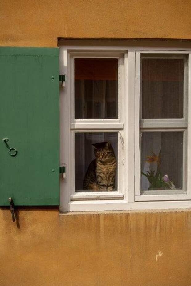 Как Ватикан с кошками боролся