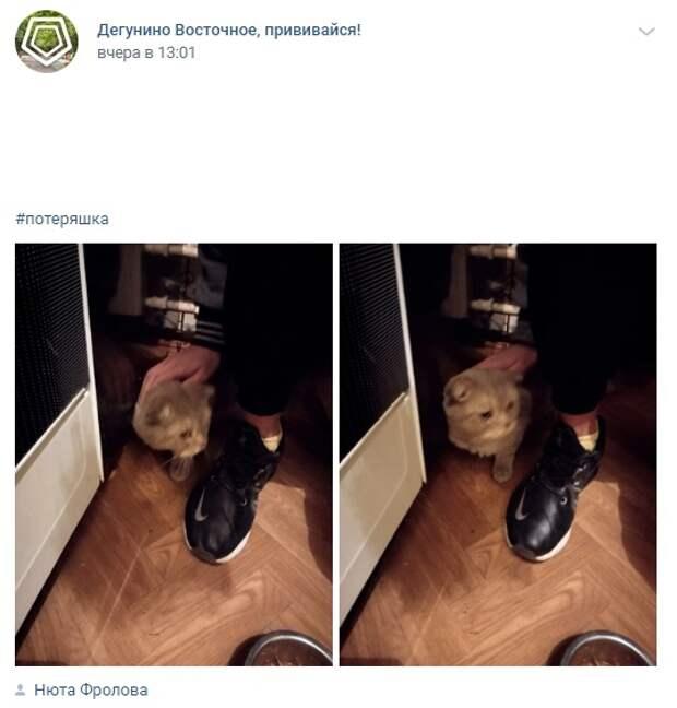Фото дня: на Дубнинской нашли кошку