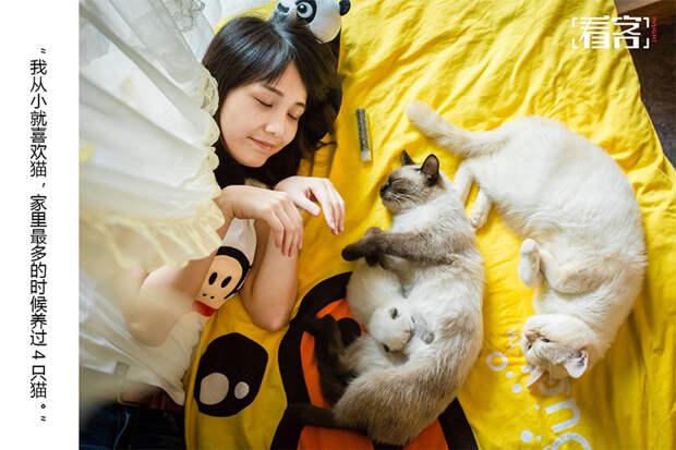 Кошачий бум охватил Китай: ради любимых котиков люди готовы на любые траты