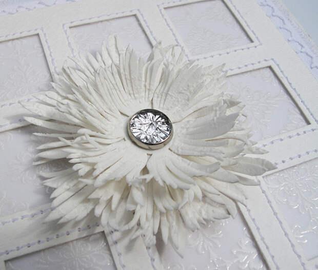 white fringe flower